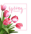 Spring text with  tulip flower. Vector illustration