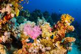 Fototapeta Fototapety do akwarium - Coral garden