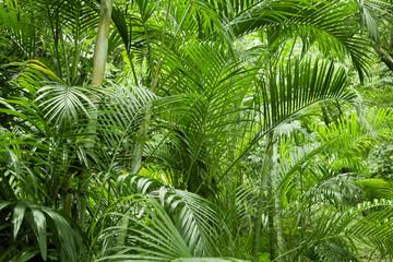Panel Szklany Podświetlane Do łazienki Lush green tropical jungle