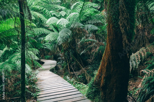 Obraz Winding boardwalk in Australian Rainforest - fototapety do salonu