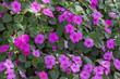 Leinwandbild Motiv Beautiful flowers background