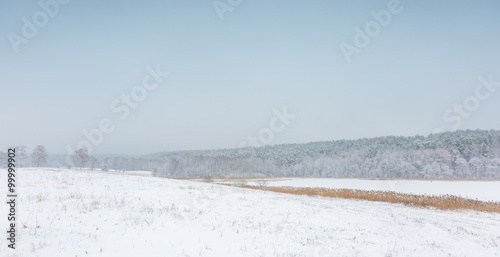 Obraz Winter field under cloudy gray sky - fototapety do salonu