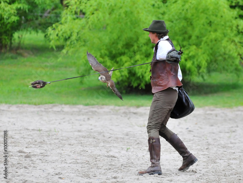 Falconry Poster