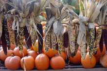Indian Corn Hanging On A Line In Front Of Some Pumpkins