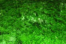 Fresh Aqueous, Green Background. Relaxation Wallpaper