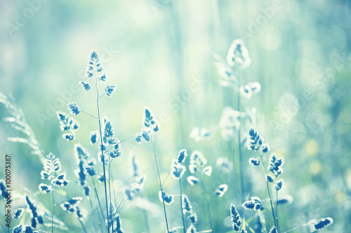 Foto  Cyan blue color blurred meadow detail background at sunset light