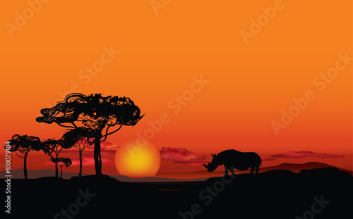 African landscape with animal rhino silhouette  Savanna sunset