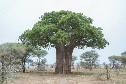 Fotografia  Baobás