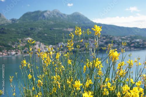 Papiers peints Bleu vert Landscape with yellow Spanish broom