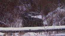 Frozen Creek Under Snowy Trees