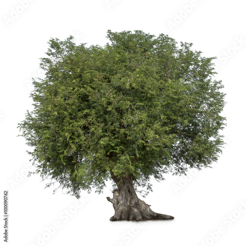 Photo Stands Bonsai Isolated tree on white background
