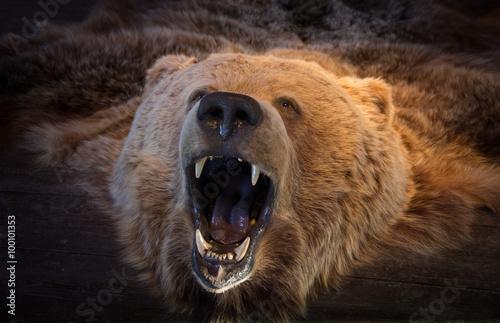 Head of brown bear bearskin Canvas Print