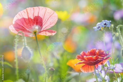 Staande foto Lente summer meadow with red poppies
