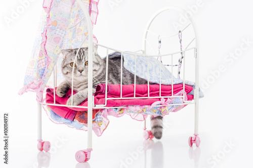 Poster de jardin Oiseaux en cage Cat posing in doll bed