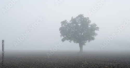 In de dag Beige lonely tree in the field in very strong fog