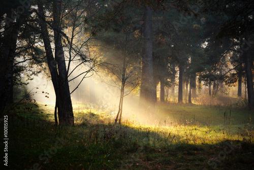 Obraz sunbeams in fog in the forest - fototapety do salonu