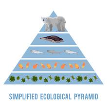 Ecosystem Energy Flow.
