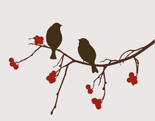 Sparrows On The Mountain Ash B...