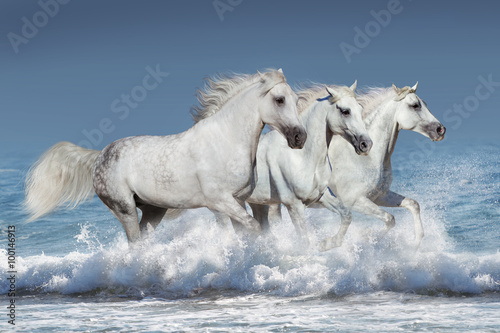 obraz dibond Horse herd run gallop in waves in the ocean