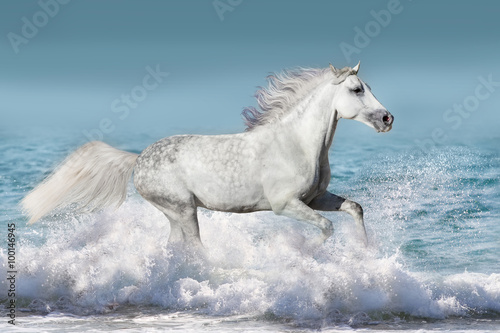 Foto op Aluminium White stallion run gallop in waves in the ocean