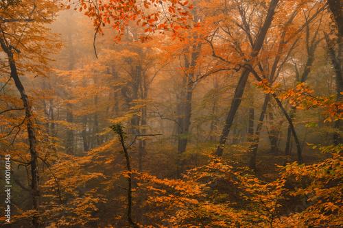 Fototapety, obrazy: Fantasy fall landscape