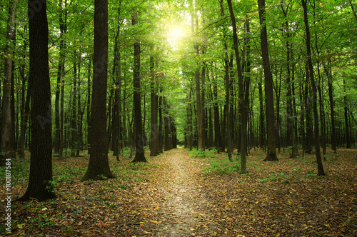 Poster Bossen Forest with sunlight
