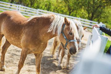 Horse at ranch.