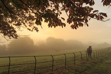Distant Horse In A Field At Sunrise On A Foggy Morning In Autumn, High Tor, Matlock, Derbyshire Dales, Derbyshire