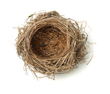 Top View Of Empty Bird Nest