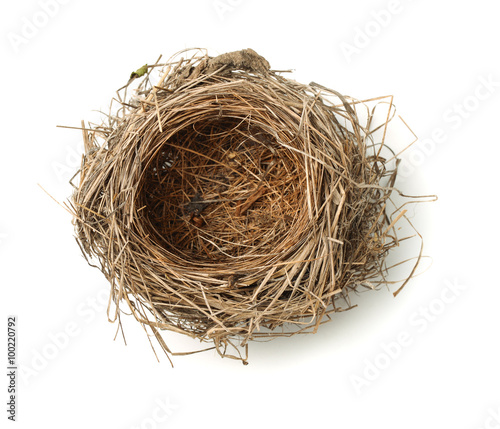 Fototapeta Top view of empty bird nest obraz