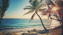 Palm Tree On The Sandy Beach