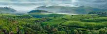 Green Hills Of Tea Plantations...