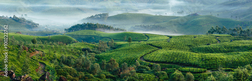 Fotomural Green hills of tea plantations in Munnar