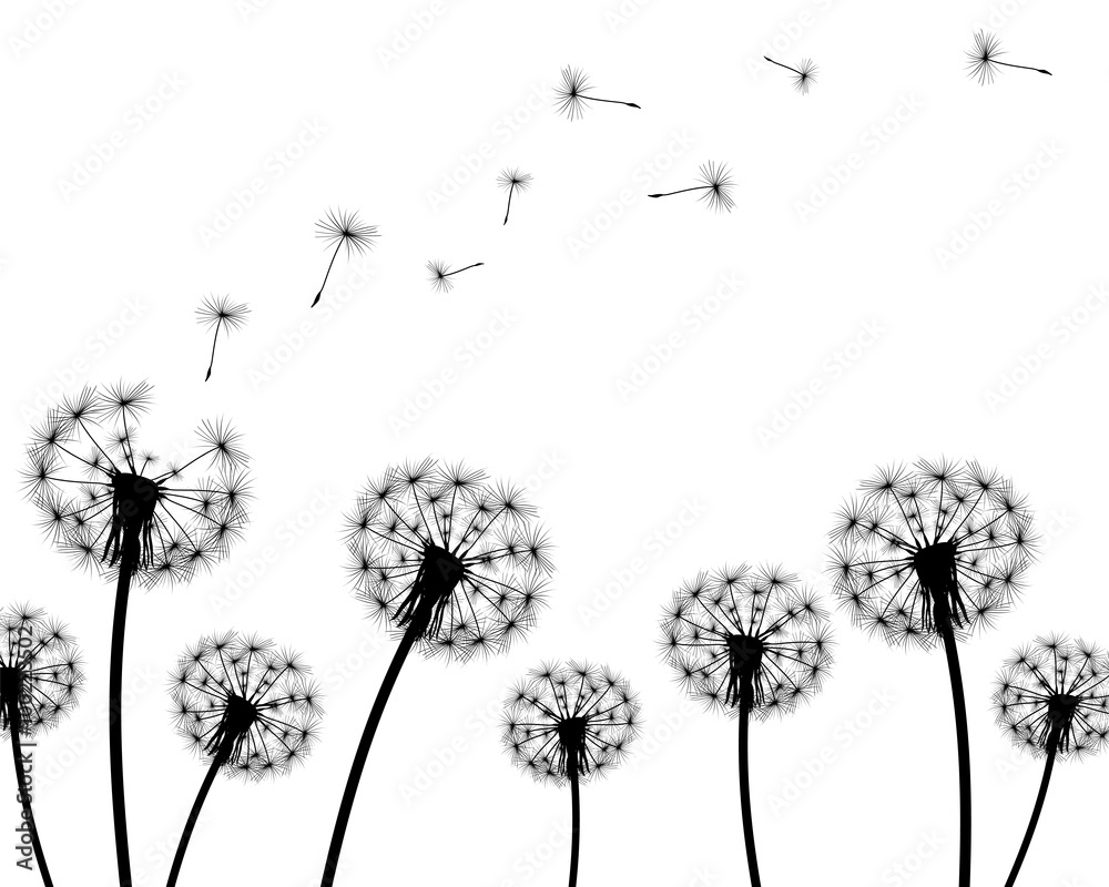 Fototapety, obrazy: background dandelion faded silhouettes on a white background
