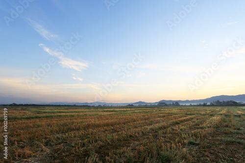Tuinposter Purper A peaceful rice field on sunrise sky background