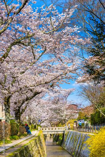 Fotobehang Tokyo Philosopher's Walk in Kyoto, Japan during spring season.