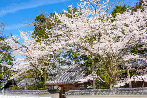Fotobehang Tokyo Kyoto in Spring at Nanzenji Temple grounds