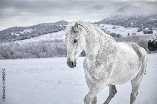 bialy-kon-w-sniegu-z-gora-w-tle