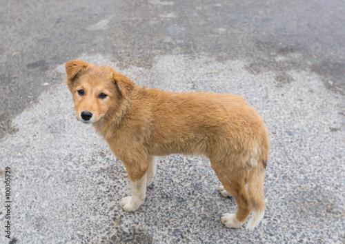 Foto  Ein wilder Mischlingshund, der die Kamera untersucht