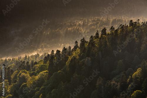 gorskie-zbocze-porosniete-gestym-lasem