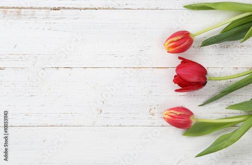 Keuken foto achterwand Tulp Tulpen
