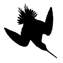 Snipe Birds Silhouettes Vector EPS 10