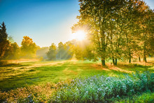 Ray Of Sunshine Through The Tree