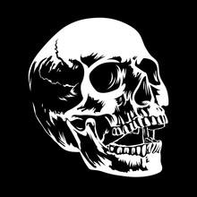 Skull 002