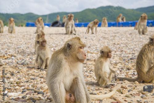 Valokuvatapetti Monkey island. Thailand.