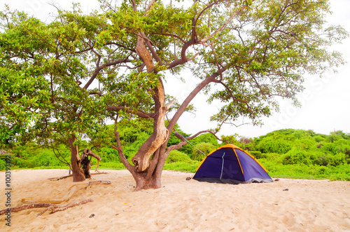 Photo  Small campsite with a two person tent setup in sand on beautiful beach, pacific