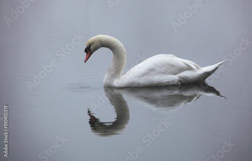 Papiers peints Cygne Swan in lake