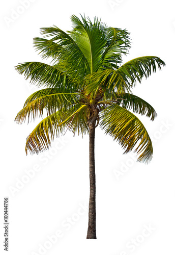 Staande foto Palm boom Palm tree isolated on white background
