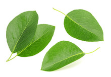 Pears Leaves Isolated On A Whi...