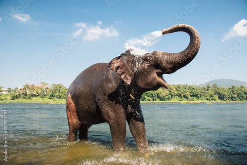 Tuinposter Olifant Elephant washing in the river